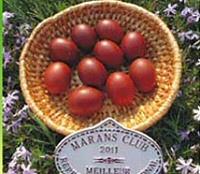 Eier vom Maranshuhn